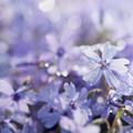 写真: 青い輝き