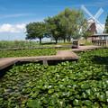 写真: 風車のある風景