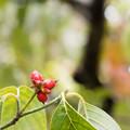 写真: 小さな秋