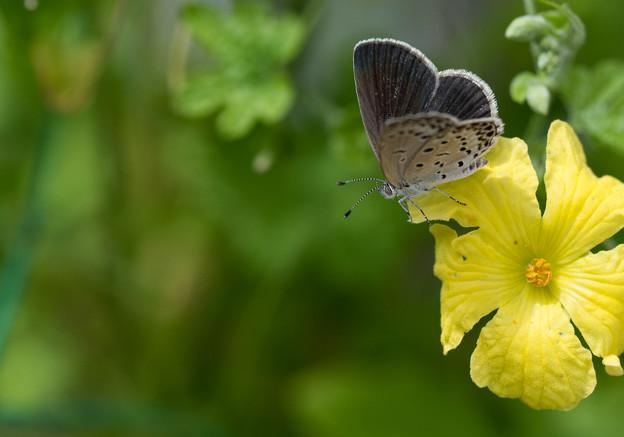 写真: 名残の花に