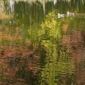 写真: マイフィールドの秋 2