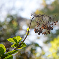 写真: マイフィールドの秋 4