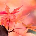 写真: 紅葉を求めて 1