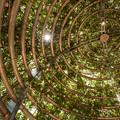 Photos: 薔薇のドーム