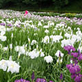 Photos: 花摘み