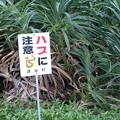 写真: 沖縄 残波岬 断崖絶壁