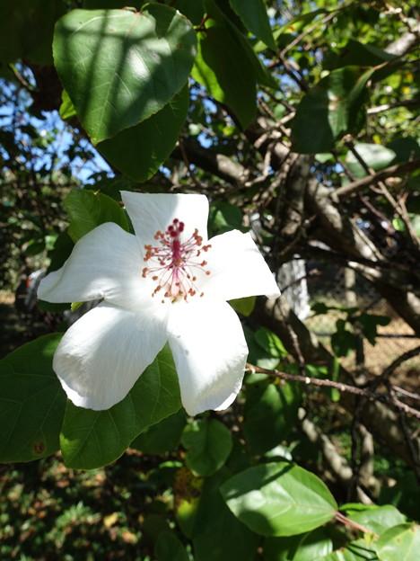 ハワイの花、樹木