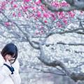 写真: いつか春が