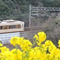 神戸総合運動公園 菜の花と北神急行7000系