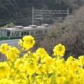 神戸総合運動公園 菜の花と神戸市交1000系