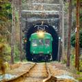 Photos: トンネルから顔を出す青ガエル。
