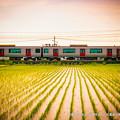 写真: 田植えが終わった平野をゆく。