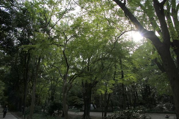 森を歩こう~♪