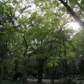 Photos: 森を歩こう~♪