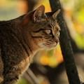 紅葉狩りする猫
