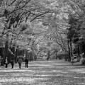 Photos: Tadasu no Mori
