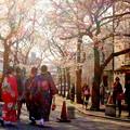 華やかな春の幕開け