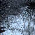 凍てつく森