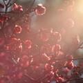 写真: 早春の光