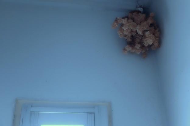 写真: トイレの花子さん