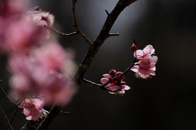 春にウィンク~♪