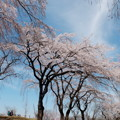春色カンバス