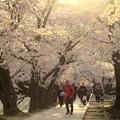 写真: 桜の余韻