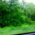 写真: 雨の大地を駆ける