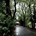 Photos: 雨の参道