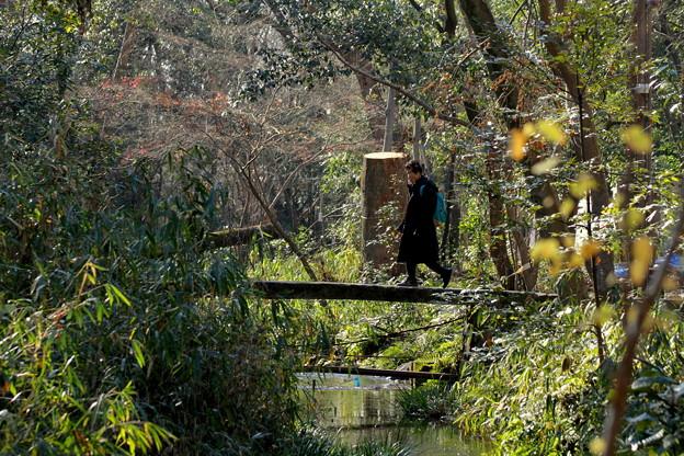写真: 糺の森(ただす)