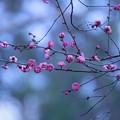 写真: 春の詩