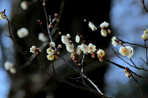 二月のかほり