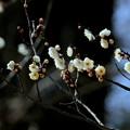 Photos: 二月のかほり