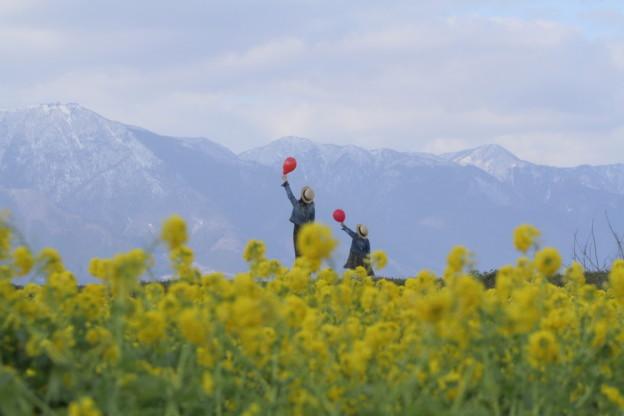 琵琶湖の春