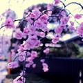 春が微笑む
