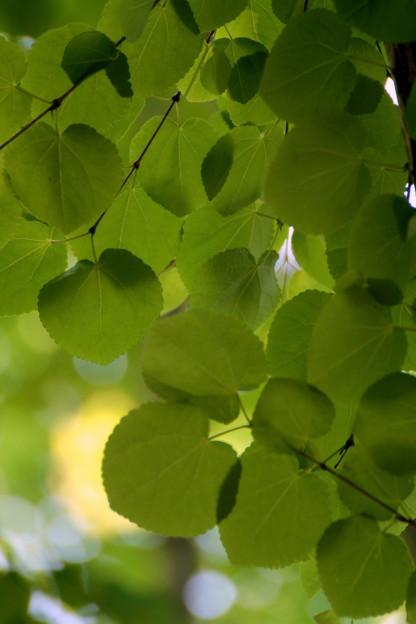 Leaf blinds