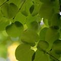 Photos: Leaf blinds