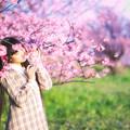 写真: 桜、香る
