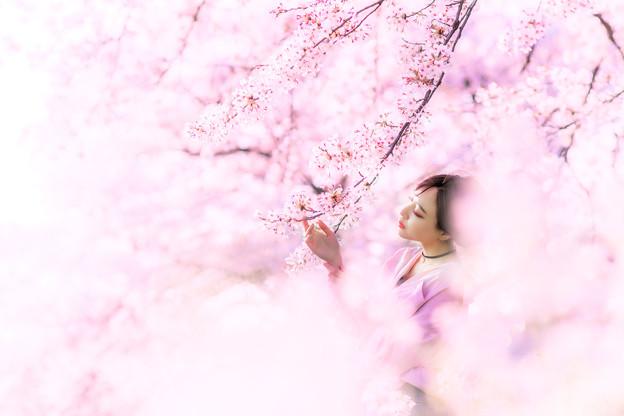 桜につつまれて