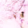 写真: 桜につつまれて