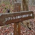 写真: 長谷池へ1