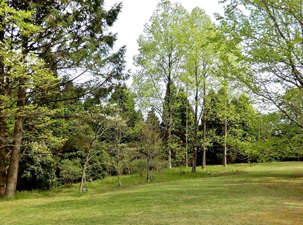 写真: シアトルの森4