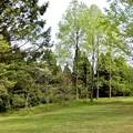 シアトルの森4