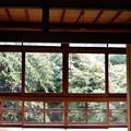 庭の眺め 3