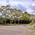 メタセコイア並木10