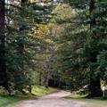 シアトルの森28