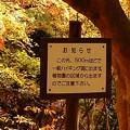 もみじ谷 2