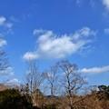 天津の森2