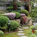 Photos: 庭の前栽 190430