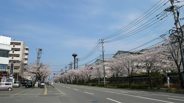 健軍自衛隊通りの桜(4)